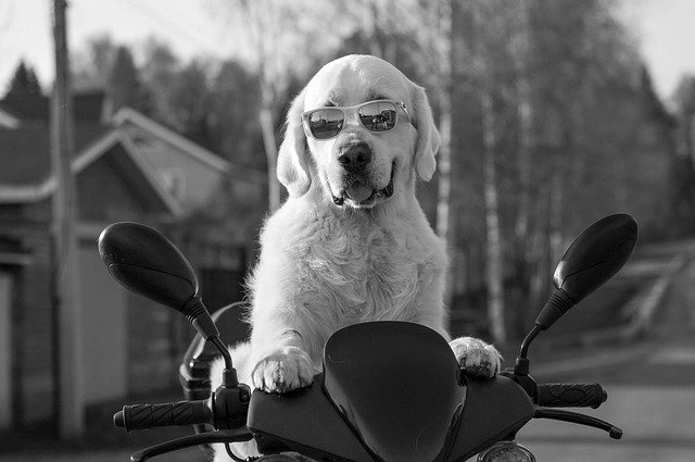 dog 2537902 640 - How to figure out your style that fits you.